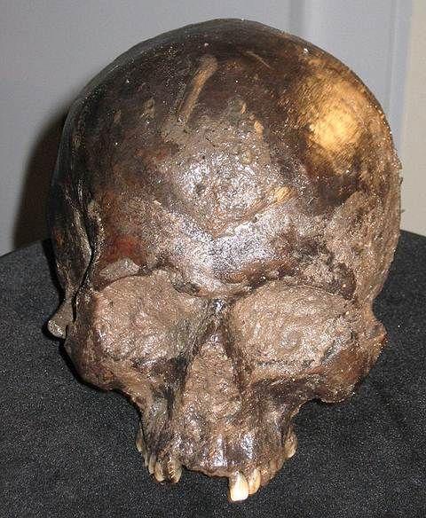 Cráneo que contenía el cerebro. Hallan un cerebro humano de 2.600 años ¿Cómo se conservó?  mar 5, 2015 @ 04:50 pm › Arkantos ↓ Deja un comentario  Uno de los cerebros más antiguos jamás hallado se ha preservado por más de dos milenios gracias al barro. El órgano intacto de la Edad del Hierro fue descubierto dentro de un cráneo decapitado hace 7 años atrás y desde entonces los expertos lo han estudiado para explicar cómo el tejido pudo superar la prueba del tiempo.  Cerebro de 2.600 años de…