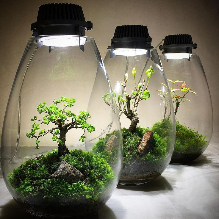 Bonsai In Mossarium Indoor Water Garden Garden Terrarium Miniature Garden