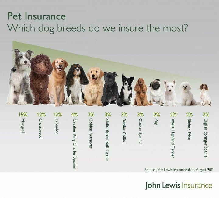 Which Dog Breeds Do We Insure The Most Petsbestinsurance Dog Insurance Pets Dogs Breeds Pet Insurance Cost