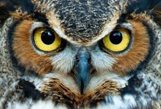 Irene Kamaratou-Giallousi: The Owl Guide (A fairy tale about the financial cr...