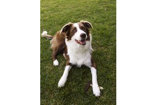 Games to Play With Herding Dogs | eHow