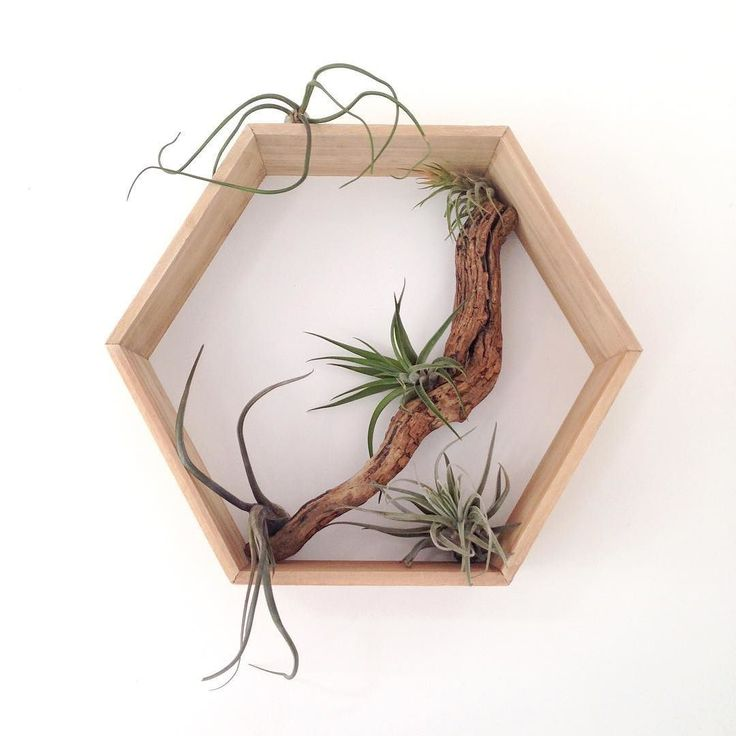 Aiming for a simple Sunday: waffles sunny windy beach walk DIY and air plant Christmas photo faffing  Enjoy your days