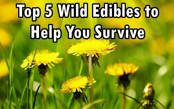 wild edible survive