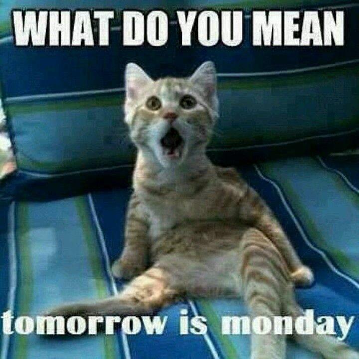 tomorrow is Monday quotes quote monday sunday sunday quotes monday humor tomorrows monday