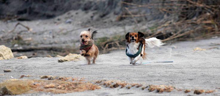 Peanut and Buttercup visit Gerani beach