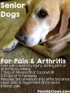 Essential Oils recipe for pain & arthritis in dogs from Young Living
