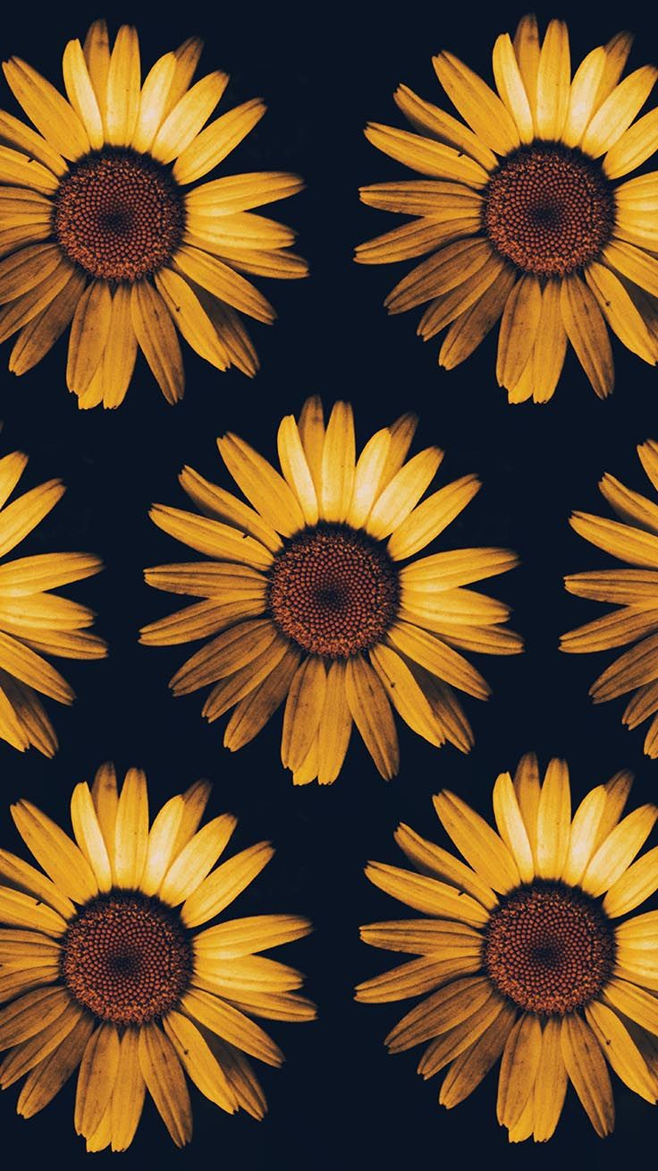 12 Super Pretty Sunflower Iphone Wallpapers Preppy Wallpapers In 2020 Sunflower Iphone Wallpaper Iphone Wallpaper Preppy Flower Phone Wallpaper