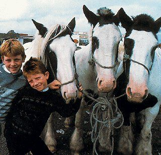 How they do love their cobbies ... Irish horse fair ... Southwest Ireland