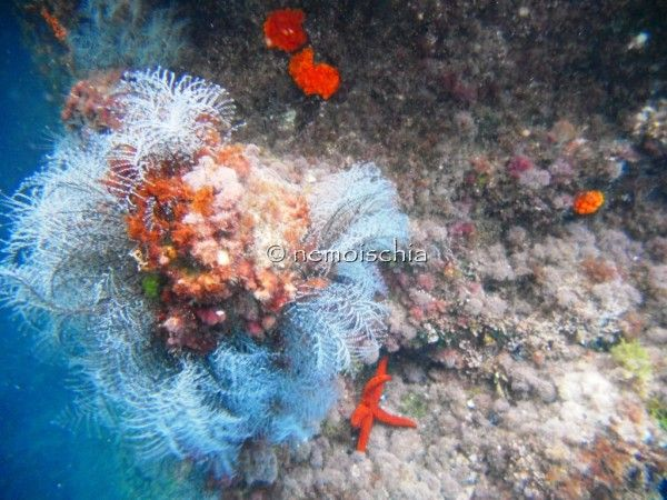 beautiful underwater scenery, starfishes and other creatures of the sea