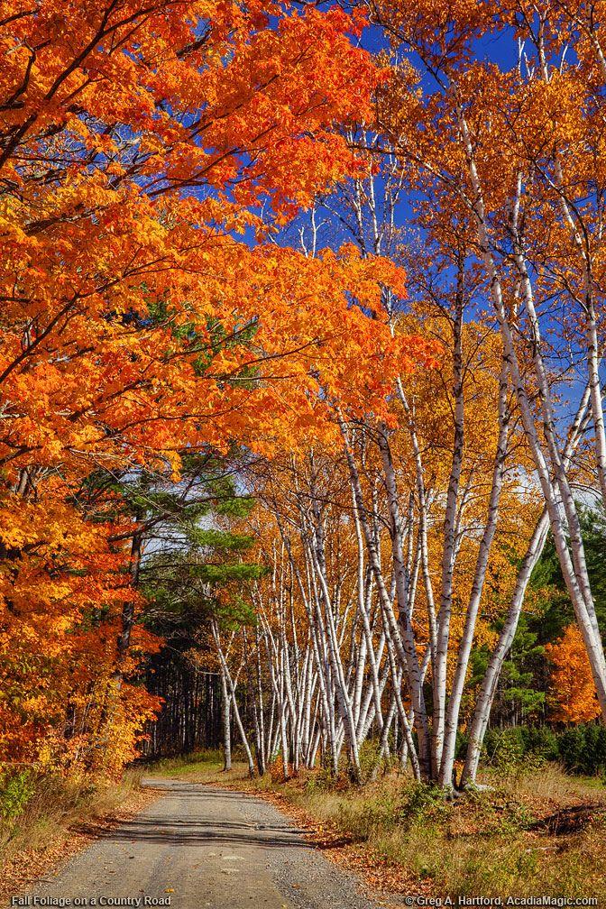 самые как назвать фото про осень период апреля прошлого