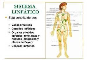 El sistema linfático se considera parte del aparato circulatorio porque está formado por los vasos linfáticos,  parecidos a los vasos sanguíneos, que transportan  linfa, que proviene de la sangre, con una composición muy parecida a la de ésta y regresa a ella. Este sistema constituye la segunda red de transporte de líquidos corporales.  CLASES PARTICULARES, FORMACIÓN, RECUPERACIÓN ACADÉMICA A DOMICILIO