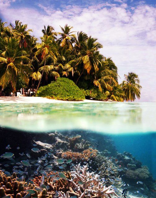 Tubbataha Reef Philippines Beautiful Places Pinterest The Philippines Dive In And South