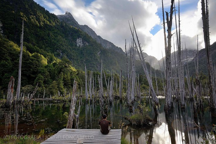 Contemplation - Parque Tagua Tagua (Patagonia - Chile)