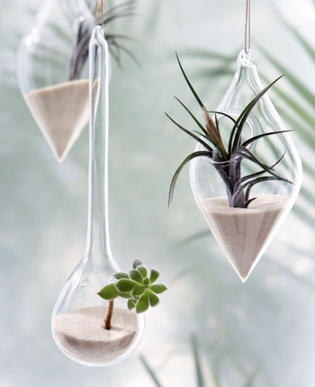 I think air plants are awesome!