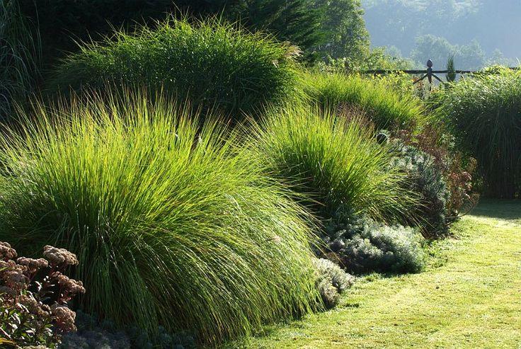 graminees au jardin contemporain
