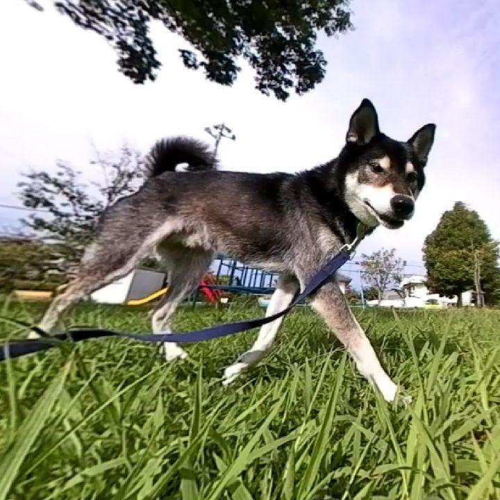 ペットスマイル投稿詳細 Petsmile ペット 犬 動物