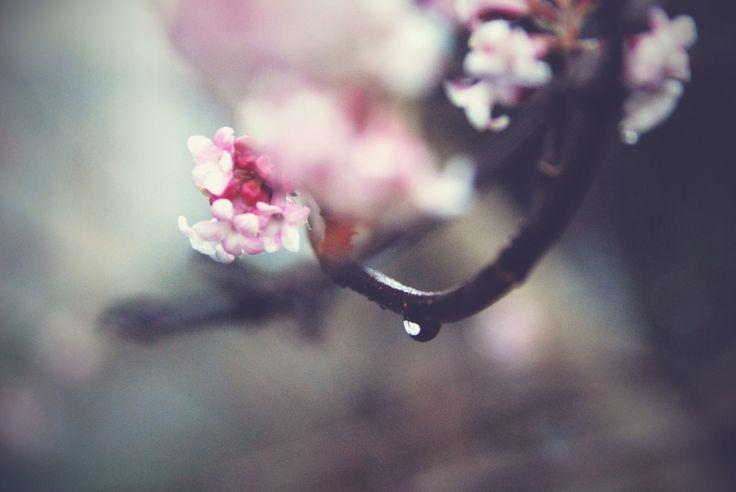 """""""Le printemps à nos portes"""" Photographie de A. Cltn, Copyright © 2014"""
