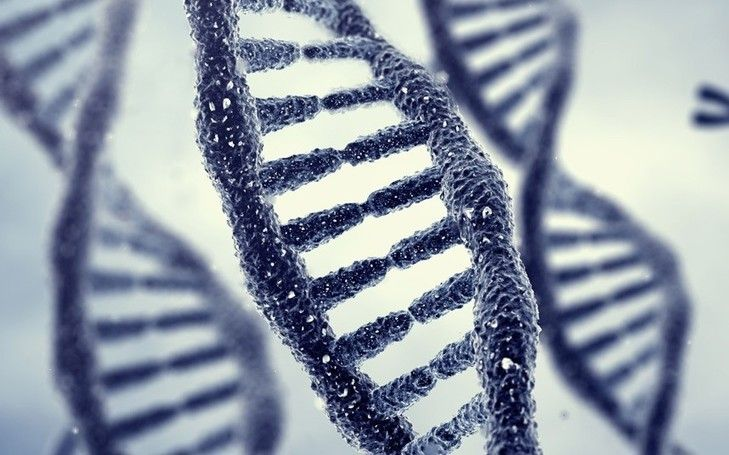 Memories may be passed down through generations in DNA, a process underlying cause of phobias