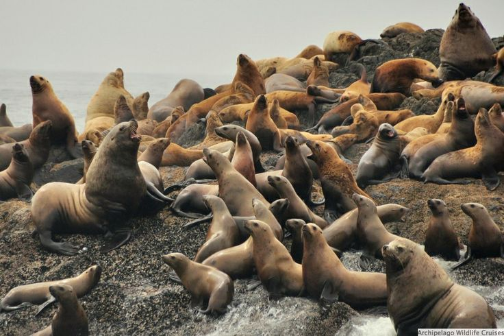Archipelago Wildlife Cruises in Ucluelet