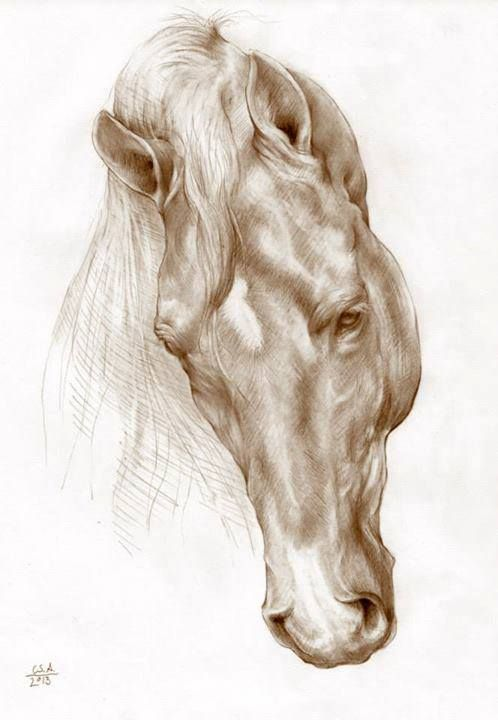 Unfortunately I don't know who created this wonderful horse portrait, but it is a stunning piece!