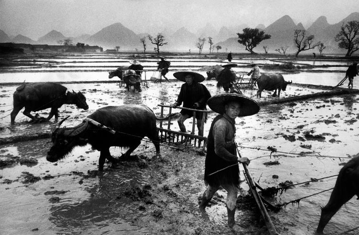 Marc Riboud CHINA. Guangxi province. The very fertile ricefields of Guangxi give two harvests a year. The work is collective in ricefields, but the equipment and the clothes are always so rudimentary. 1965. Magnum Photos -