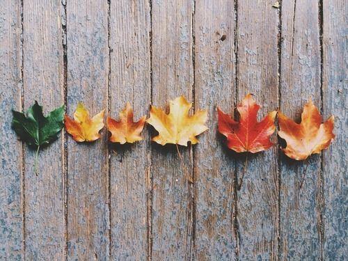Image result for fall pinterest