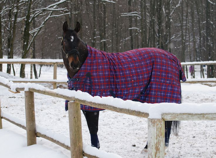 Eventing Connect writer, Christa Dillon shares some stellar advice on how riders can cope with the off-season and wintertime in her hilarious style...