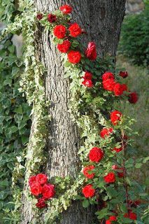 Flores e rosas vermelhas: