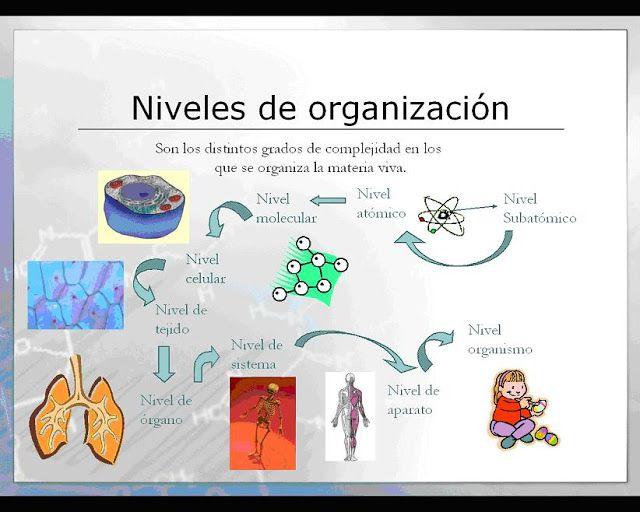Niveles De Organizacion En El Cuerpo Humano Celula Tejido Organo Sistema Organizacion De La Materia Sistemas Del Cuerpo Humano Tejidos Y Organos