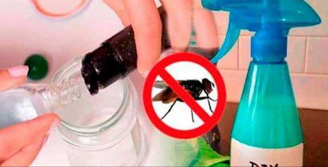 Todos sabemos que las moscas son unas de las plagas que menos deseamos tener en nuestras casas, sobre todo porque estas sobreabundan en la cocina, y bien sabemos que estas tren consigo bacterias que pueden contaminar nuestros alimentos. La presencia de moscas en la cocina y en varias áreas de la casa es de alarmarse