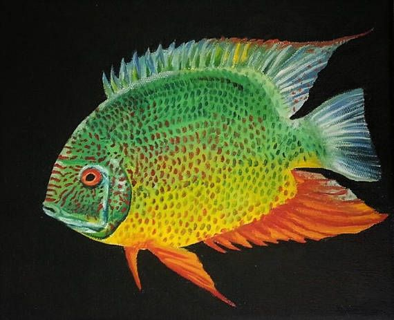 Severum Cichlid Painting And Prints Etsy Cichlids Fish Art Fish Painting