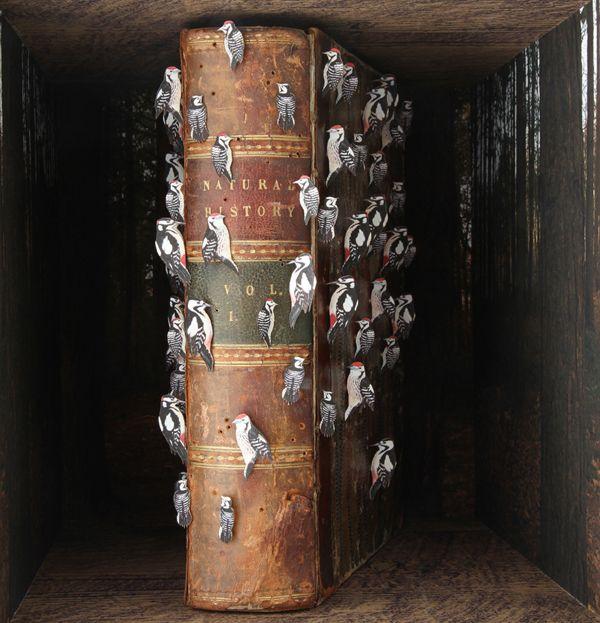 John DilnotAntiques Maps, Old Book, John Dilnot, Natural History, Heart Art, Antique Maps, Shadows Boxes, Nature History, Birds