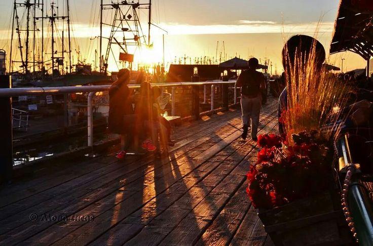 Autumn sunset's rays lightning up flowers on Fisherman's Wharf in Steveston, Richmond, B.C.