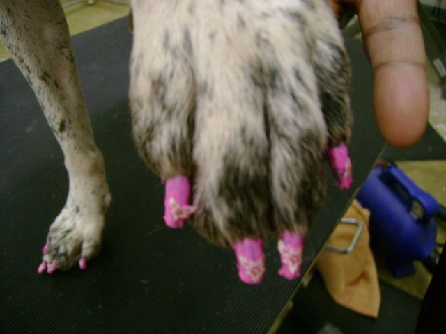 8 best animal hut grooming images on pinterest animais animaux we have always offered nail polishing for our grooming clients but now we also offer nail solutioingenieria Gallery