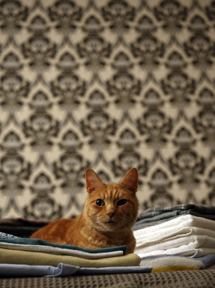 Best Cat Breeds For Busy Couples Cat Urine Smells Cat