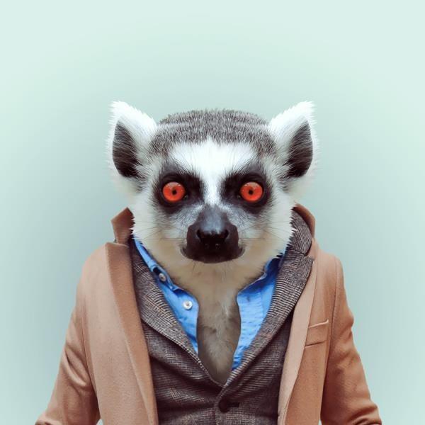 Marre de voir tous ces animaux à poil dans la nature ? Le graphiste Yago Partal a eu l'idée de les habiller, de manière plutôt classe, et des les shooter en studio photo. Ca n'a pas dû être simple, ma