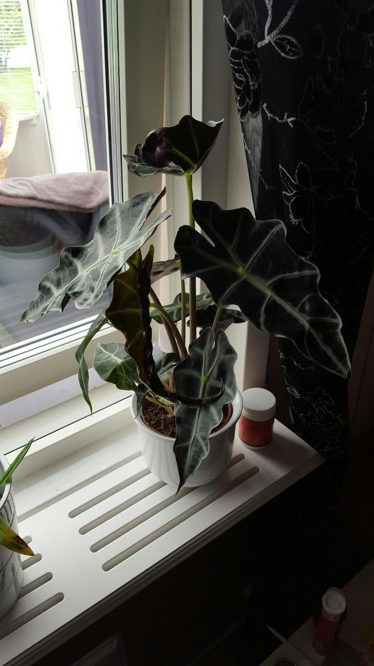 my corner of the world: New plant