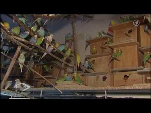 Wellensittiche zähmen leicht gemacht - YouTube