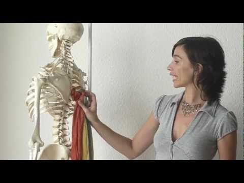"Cómo ""enderezar"" la espalda (reduciendo la ""joroba"") - Feldenkrais con Lea Kaufman - YouTube"