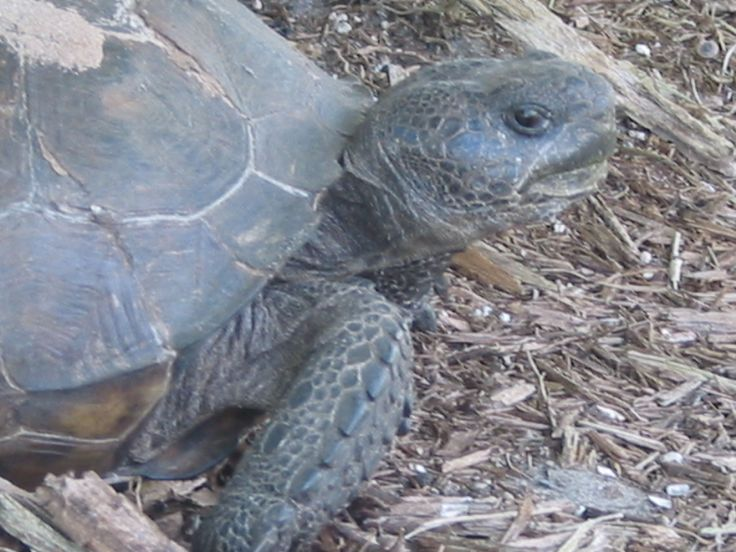 An old sea tortoise on an adventure to find his family