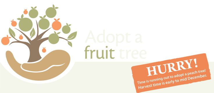 """Adopt a fruit tree: It is a unique concept being offered by Simon and Margaret Tadrosse from the famous """"Bilpin Fruit Bowl"""". For a cost of $150 per year (gst included), anyone can adopt a fruit tree. Select from a range of peach or apple trees. Pink Lady Apple Trees are slightly dearer at a cost of $210 per tree(GST Included). When it's harvest time you can enjoy the scenic drive to Bilpin to pick approx 60kg of fresh, ripe, in season, Australian grown fruit from your very own tree."""