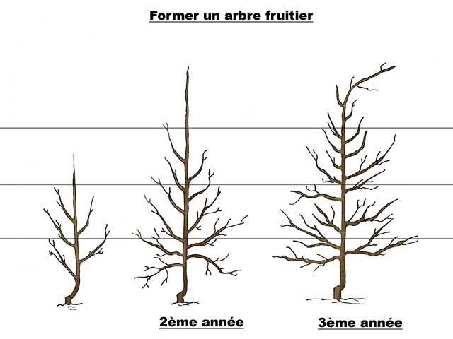 25 beste idee n over taille arbre fruitier op pinterest for Comment entretenir un citronnier