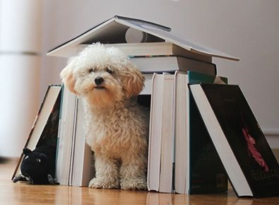 book doghouse