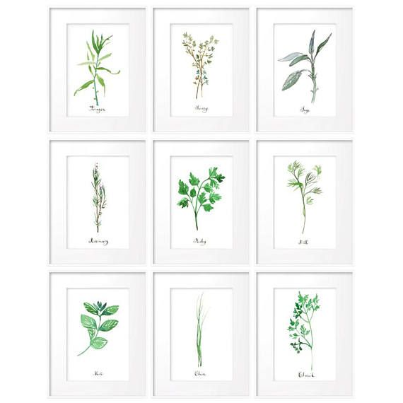 Set Of 9 Herb Prints Kitchen Print Set 4x6 Watercolor Herb