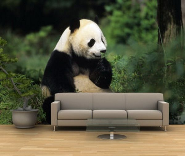 1000 Images About Panda And White Tiger Room On Pinterest