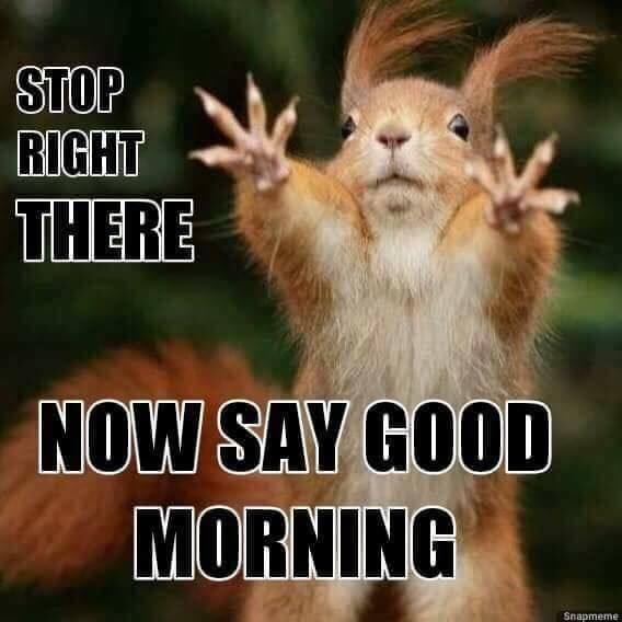 Stop Right There Now Say Good Morning Morning Good Morning Good Morning Quotes Good Mo Funny Good Morning Memes Morning Quotes Funny Funny Good Morning Quotes