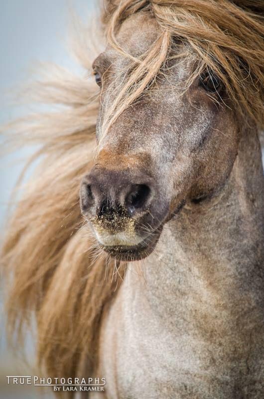 Voici 32 magnifiques chevaux à la chevelure spectaculaire!