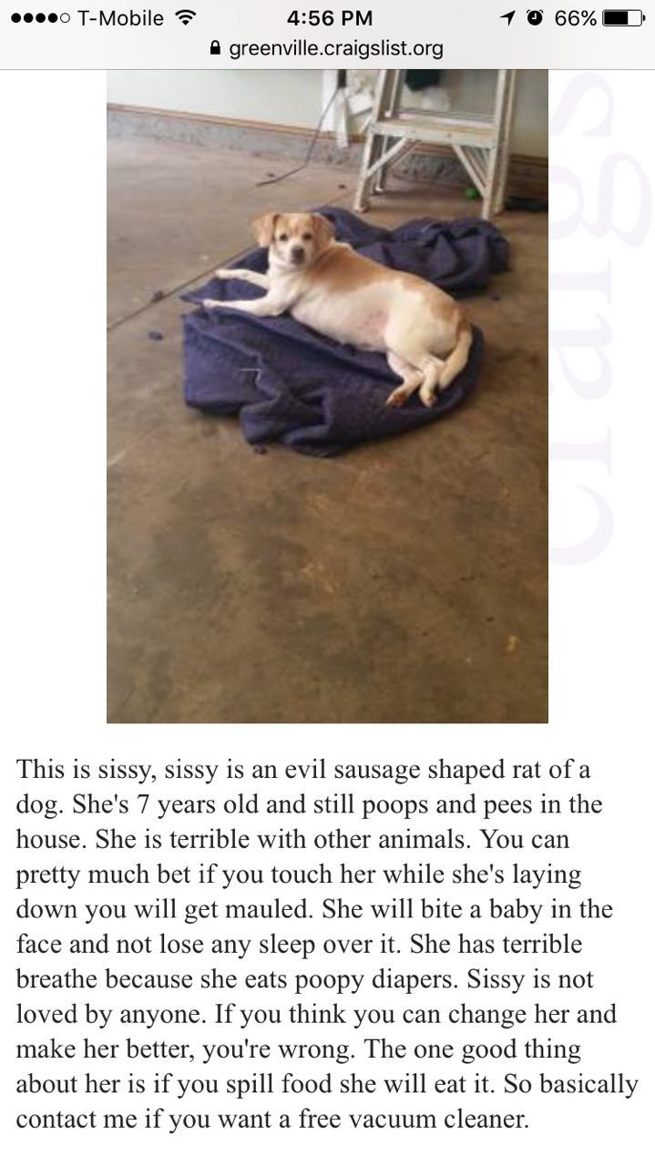 Found this ad while look at dogs on Craigslist. I think I'm going to passDariisa - http://asianpin.com/found-this-ad-while-look-at-dogs-on-craigslist-i-think-im-going-to-passdariisa/