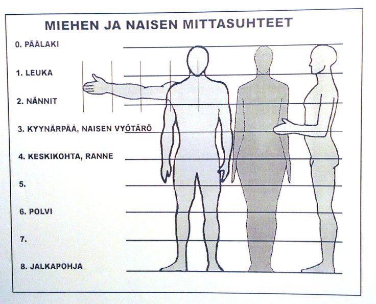 Ihminen - miehen ja naisen mittasuhteet.