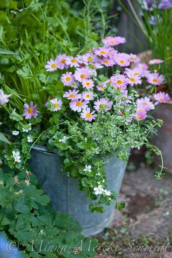 17 beste idee n over tuinieren in potten op pinterest for Groenten tuin
